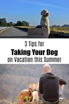 3 Tips for Taking Your Dog on Vacation this Summer - Postcards & Passports