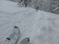Splitboarding and Dogs, Aint life grand!! http://mtnweekly.com/reviews/snowboards/snowboard-reviews/furberg-freeride-splitboard-review