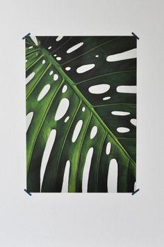 plant 1.0 poster 03 monstera 115 gr affichepapier 59.7 x 42 cm