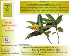 Redescubre esta especie nativa, el Maricao...Guía de Árboles de Puerto Rico