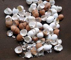 Farinha caseira de cascas de ovos para enriquecer o solo.