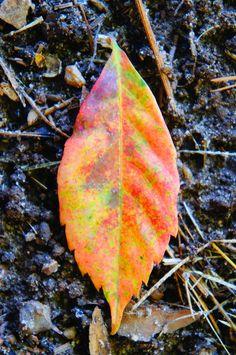 15 hojas de otoño libres imágenes - 1 millón de fotos gratis