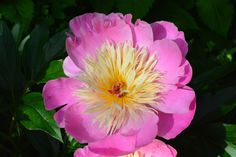 Aamun kauneutta  Bowl of beauty