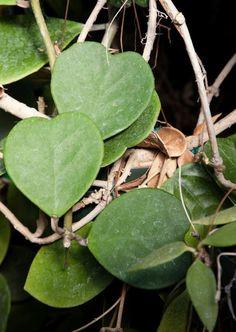 Low-maintenance houseplants that thrive on neglect Types Of Houseplants, Hoya Plants, Jade Plants, Small House Garden, Silver Bay, Lower Lights, Crassula Ovata, Spider Plants, Snake Plant