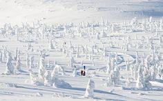 Ski Trysil: piste guide - Telegraph