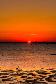"""#""""Holy City Sunset""""(South Carolina)*-*.  #Travel South Carolina USA multicityworldtravel.com We cover the world over 220 countries, 26 languages and 120 currencies Hotel and Flight deals.guarantee the best price"""