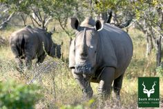 South African National Parks images