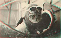 aviator cat