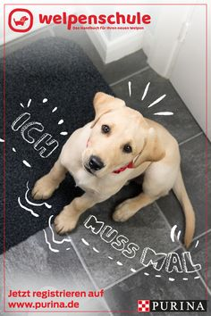 Is your puppy house-trained? Known how with the Purina® puppy school - register now - The first time with a puppy has some challenges. The team of experts from the Purina® puppy school - Cute Funny Animals, Funny Dogs, Cute Dogs, Animals And Pets, Baby Animals, Puppy School, Egyptian Cats, Birthday Wishes Funny, Decorating Bathrooms