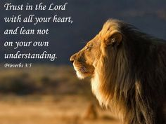 Scripture Quotes, Bible Verses, Scriptures, Psalm 37, Like A Lion, Mere Mortals, Proverbs 3, Life Words, Cover Photos