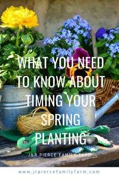 If you're thinking about starting your spring garden soon, wait a second! Here are some tips for timing your spring plantings so you don't have to worry about a late-season frost killing your plants. #gardening #springgardening #jrpiercefamilyfarm #plantingseeds #plantingseedlings Spring Plants, Spring Garden, Planting Seeds, Homesteading, Frost, Gardening, Seasons, Tips, Lawn And Garden