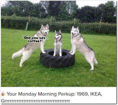 ☕ Your Monday Morning Perkup: 1969, IKEA, Grrrrrrrrrrrrrrrrrrrrrrrrrrrrrrrrrrrrrr