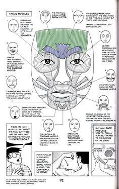 Muscles that drive expression - Plastische Chirurgie Facial Muscles Anatomy, Muscle Anatomy, Muscles Of Facial Expression, Dental Anatomy, Medical Anatomy, Anatomy Head, Botox Face, Dental Hygiene School, Medical School