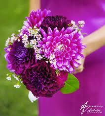 Google Image Result for http://www.vibrantbride.com/images/photoalbum/14/Magenta_Dahlias_Wedding_Bouquet.jpg