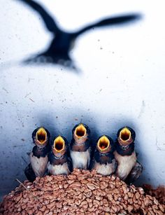 'Mom's baby,' Fan Chen, China, Wildlife Sony World Photography Awards Photography Competitions, Photography Contests, World Photography, Photography Awards, Animal Photography, Amazing Photography, Portrait Photography, Beautiful Birds, Animals Beautiful