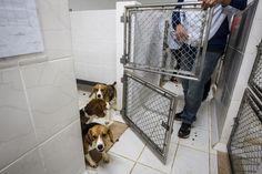 GUAPIMIRIM REAGE BRASIL.: LNBio estuda alternativas a uso de animais