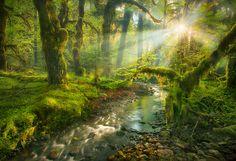 """""""A natureza, em sua perfeição consentânea com as leis da Criação, é a mais bela dádiva que Deus deu às suas criaturas"""" (Mensagem do Graal, vol. 3, Natureza)"""