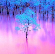 Nature keeping up with trending color pallets. Absolutely love the blue and pink! Beautiful Nature Wallpaper, Beautiful Landscapes, Pink Nature, Pretty Wallpapers, Galaxy Wallpaper, Iphone Wallpaper, Fantasy Landscape, Nature Pictures, Amazing Nature