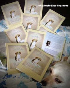 A chapter book for young readers promoting animal kindness!  To learn more visit www.thelittlebluedog.com
