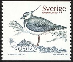 Northern Lapwing stamps - mainly images - gallery format