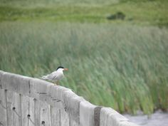 Vida selvagem em Prince Edward Island National Park