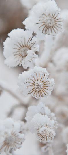 a bloom in winter