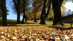 Bem vindo outono!!!  veja mais no blog jardim de Helena