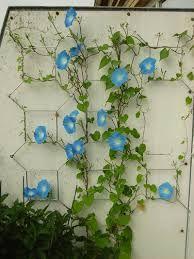 Bildresultat för blomman för dagen balkong