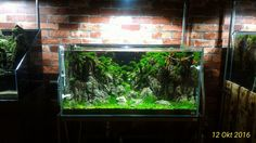 O2 Aquatic Kelapa gading.. - Prayogi Aquascape