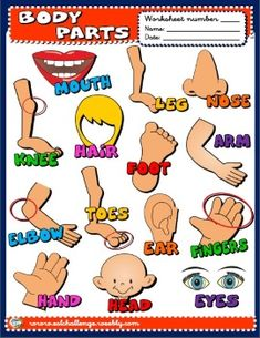 ENGLISH FUN TIME - eslchallenge Primary English, Kids English, English Words, Flashcards For Kids, Worksheets For Kids, Preposition Pictures, Weather Worksheets, English Projects, English Teaching Resources