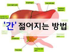 '간' 젊어지는 방법 ~ 웰빙나라 Genital Herpes, Lobe, Sense Of Life, Asian Garden, Slim Body, Herbal Remedies, Beauty Care, Herbalism, The Cure