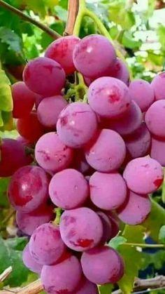 Nutrition Guide For Diabetics Fruit Plants, Fruit Garden, Fruit Trees, Fruit And Veg, Fruits And Vegetables, Fresh Fruit, Beautiful Fruits, Beautiful Flowers, Fruits Photos