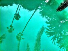Palm trees swimming pool