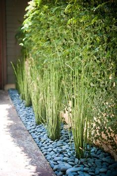 Landscape River Rock Design Landscaping Austin, River Rock Landscaping, Landscaping With Rocks, Modern Landscaping, Front Yard Landscaping, Landscaping Ideas, Bamboo Garden, Bamboo Plants, Bamboo Grass