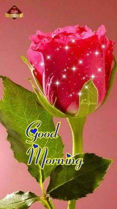 Morning Msg Morning Qoutes Morning Love Good Morning Coffee Morning Greetings Quotes Good Morning Images Night Quotes Good Day Wishes Good Morning Flowers May God bless you and your family, Enjoy this day for it was given to us as a gift From the - Salvab Good Morning Dear Friend, Good Morning Wednesday, Good Morning Msg, Good Morning Cards, Good Morning Greetings, Good Morning Roses, Good Morning Image Quotes, Good Morning Beautiful Images, Good Morning Inspirational Quotes