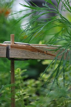 Wood skewers with a clothespin attached....what a great plant marker/label idea!