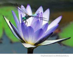 Фото Без названия. Альбом птицы, насекомые - 461 фото. Фотографии ♦ Ева Пинега ♦.