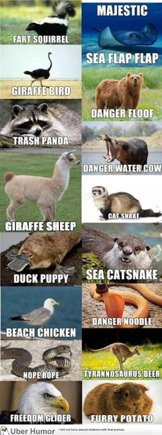 Real names for these animals