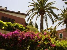 le palme di Taormina