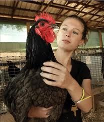 7 Best Jersey Giants Images Chicken Breeds Chickens