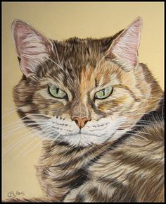 Custom pet portraits from your photographs by Cindy Barillet, French pet artist