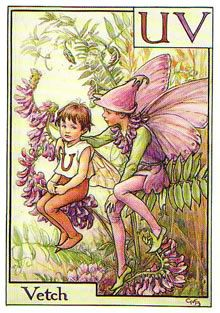 Bronte: Cicely Mary Barker-(June 28, 1895-February 16, 1973) English illustrator best known for a series of illustrations depicting fantasy fairies and flowers