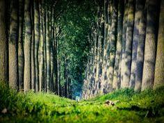 Magical tree tunnel Bruges, Belgium.  3 mile scavenger hunt to find it,  but we'll worth the effort.