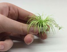 """a-mini-a-day: """"Pia Becker of Lamis Minis makes mini plants and flowers """""""