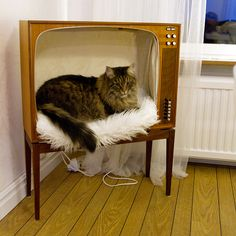 Cat bed in old TV. <3