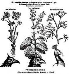 Phytognomonica Giambattista della Porta