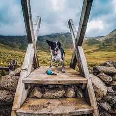 Pip took a break from his walk to pose for the ! @hkinuthia decided to hike around #Wasdale before Pip started hamming it up. Show us your photogenic pups by following the link in our profile. #GoPro
