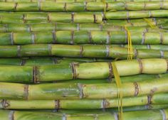 Huge Suger cane at Leicester Mela Sugarcane Juice, Leicester, Canes, Puerto Rico, Asparagus, England, Bread, Studs, Brot