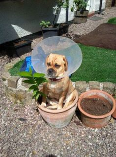 17 Dogs Who Turned a Cone of Shame Into a Cone of Pride