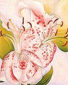 Georgia O Keeffe. Pink Spotted Lily II, 1936